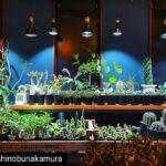 AMATERAS LED 使用実例 @toshinobunakamura 様