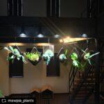 AMATERAS LED 使用実例 @mawpia_plants 様
